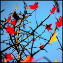 Frank Titze, Ulm/Germany - No. 5895 : Square 1:1 VI - Red and Yellow Leafs - ImageWidth : --- xImageHeight : ---  Pixel - 435 kB