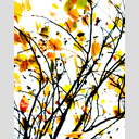 Frank Titze, Ulm/Germany - No. 5897 : Square 1:1 VI - Leaving Leafs - ImageWidth : --- xImageHeight : ---  Pixel - 509 kB
