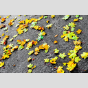 Frank Titze, Ulm/Germany - No. 5906 : Square 1:1 VI - Colored Leafs on Tar I - ImageWidth : --- xImageHeight : ---  Pixel - 1057 kB