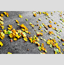 Frank Titze, Ulm/Germany - No. 5907 : Square 1:1 VI - Colored Leafs on Tar II - ImageWidth : --- xImageHeight : ---  Pixel - 1031 kB