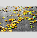 Frank Titze, Ulm/Germany - No. 5908 : Square 1:1 VI - Colored Leafs on Tar III - ImageWidth : --- xImageHeight : ---  Pixel - 1051 kB