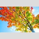 Frank Titze, Ulm/Germany - No. 608 : Y 2012-12 - Autumn I - 959x640 Pixel - 523 kB
