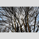 Frank Titze, Ulm/Germany - No. 6132 : Y 2018-09 - Branches - ImageWidth : --- xImageHeight : ---  Pixel - 853 kB