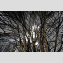 Frank Titze, Ulm/Germany - No. 6133 : Y 2018-09 - Mystic Branches - ImageWidth : --- xImageHeight : ---  Pixel - 789 kB