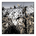 Frank Titze, Ulm/Germany - No. 6145 : Places - Fence - ImageWidth : --- xImageHeight : ---  Pixel - 428 kB