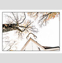 Frank Titze, Ulm/Germany - No. 626 : Y 2012-12 - Tree and Church - 922x640 Pixel - 289 kB