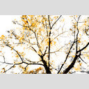 Frank Titze, Ulm/Germany - No. 632 : Y 2012-12 - Orange Trees - 959x640 Pixel - 465 kB