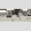 Frank Titze, Ulm/Germany - No. 6472 : Square 1:1 VIII - Stone Circle and 3 Sheeps - ImageWidth : --- xImageHeight : ---  Pixel - 312 kB