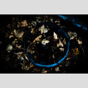 Frank Titze, Ulm/Germany - No. 648 : Film 3:2 I - Hubcap filled with Leaves - 953x640 Pixel - 238 kB
