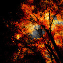Frank Titze, Ulm/Germany - No. 651 : Trees I - Fire - 640x640 Pixel - 386 kB