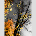 Frank Titze, Ulm/Germany - No. 652 : Trees I - Grey Sky - 480x640 Pixel - 268 kB