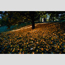 Frank Titze, Ulm/Germany - No. 655 : Trees I - Falling Leaves - 959x640 Pixel - 568 kB