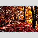Frank Titze, Ulm/Germany - No. 670 : Trees I - Red Autumn - 959x640 Pixel - 611 kB