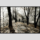 Frank Titze, Ulm/Germany - No. 673 : Trees I - Wedding Lane II - 947x640 Pixel - 403 kB