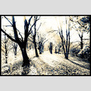 Frank Titze, Ulm/Germany - No. 674 : Trees I - Wedding Lane III - 947x640 Pixel - 489 kB