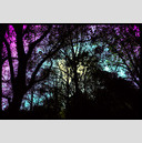 Frank Titze, Ulm/Germany - No. 675 : Trees I - Colored Sky - 947x640 Pixel - 432 kB