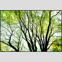 Frank Titze, Ulm/Germany - No. 677 : Trees I - Last Leaves - 953x640 Pixel - 663 kB