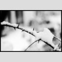 Frank Titze, Ulm/Germany - No. 691 : BW I - First Snow VIII - 947x640 Pixel - 158 kB