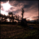 Frank Titze, Ulm/Germany - No. 704 : Trees I - Dead in the Sun - 640x640 Pixel - 253 kB