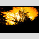Frank Titze, Ulm/Germany - No. 706 : Trees I - Sky Fire - 947x640 Pixel - 299 kB