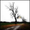 Frank Titze, Ulm/Germany - No. 718 : Trees I - Trees - 640x640 Pixel - 134 kB