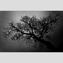 Frank Titze, Ulm/Germany - No. 719 : BW I - Lung Tree - 960x638 Pixel - 448 kB