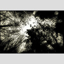 Frank Titze, Ulm/Germany - No. 720 : Trees I - Dark - 953x640 Pixel - 358 kB