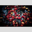 Frank Titze, Ulm/Germany - No. 725 : Trees I - Red and Yellow on Grey - 953x640 Pixel - 394 kB