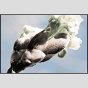 Frank Titze, Ulm/Germany - No. 7305 : Flowers - Launching Spring I - ImageWidth : --- xImageHeight : ---  Pixel - 418 kB