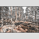 Frank Titze, Ulm/Germany - No. 7354 : Y 2020-01 - Finnish Forest IV - ImageWidth : --- xImageHeight : ---  Pixel - 995 kB