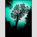 Frank Titze, Ulm/Germany - No. 738 : Trees I - Surrounded - 460x640 Pixel - 160 kB