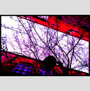 Frank Titze, Ulm/Germany - No. 745 : Trees I - Between Red Walls III - 947x640 Pixel - 626 kB