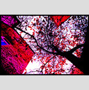 Frank Titze, Ulm/Germany - No. 746 : Trees I - Between Red Walls IV - 947x640 Pixel - 660 kB