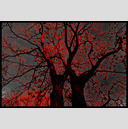 Frank Titze, Ulm/Germany - No. 752 : Trees I - Tree on Fire - 947x640 Pixel - 572 kB
