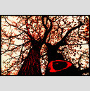 Frank Titze, Ulm/Germany - No. 753 : Trees I - Red Tree - 947x640 Pixel - 532 kB