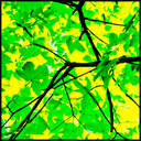 Frank Titze, Ulm/Germany - No. 7591 : Trees II - Yellow and Green I - ImageWidth : --- xImageHeight : ---  Pixel - 682 kB