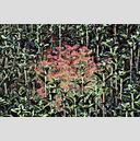 Frank Titze, Ulm/Germany - No. 7607 : Flowers - Plant Structure VI - ImageWidth : --- xImageHeight : ---  Pixel - 1096 kB