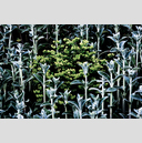 Frank Titze, Ulm/Germany - No. 7608 : Flowers - Plant Structure VII - ImageWidth : --- xImageHeight : ---  Pixel - 861 kB