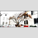 Frank Titze, Ulm/Germany - No. 770 : Cine 2.35:1 I - Backyard Tree - 960x413 Pixel - 211 kB