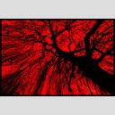 Frank Titze, Ulm/Germany - No. 771 : Trees I - Black on Red - 947x640 Pixel - 583 kB