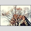 Frank Titze, Ulm/Germany - No. 793 : Ulm Center - Orange Tree - 953x640 Pixel - 512 kB