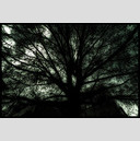 Frank Titze, Ulm/Germany - No. 794 : Trees I - Black Tree - 947x640 Pixel - 298 kB