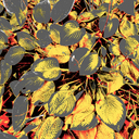 Frank Titze, Ulm/Germany - No. 8135 : Y 2020-11 - My Colored Leafs VII - ImageWidth : --- xImageHeight : ---  Pixel - 750 kB