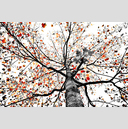 Frank Titze, Ulm/Germany - No. 8168 : Trees II - Red Grey on White - ImageWidth : --- xImageHeight : ---  Pixel - 956 kB