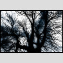 Frank Titze, Ulm/Germany - No. 822 : Trees I - Black Witch - 947x640 Pixel - 358 kB