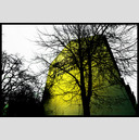 Frank Titze, Ulm/Germany - No. 8237 : Ulm South - Yellowed Tree and Wall - ImageWidth : --- xImageHeight : ---  Pixel - 748 kB