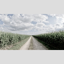 Frank Titze, Ulm/Germany - No. 8724 : Places - Corn under Clouds III - ImageWidth : --- xImageHeight : ---  Pixel - 459 kB