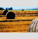 Frank Titze, Ulm/Germany - No. 8812 : Ulm West - Harvested Straw Field Roles V - ImageWidth : --- xImageHeight : ---  Pixel - 735 kB