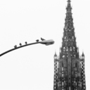 Frank Titze, Ulm/Germany - No. 8823 : Ulm Center - Doves before Minster - ImageWidth : --- xImageHeight : ---  Pixel - 162 kB