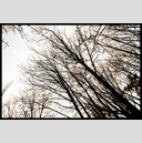 Frank Titze, Ulm/Germany - No. 887 : Trees I - Winter Trees - 947x640 Pixel - 489 kB